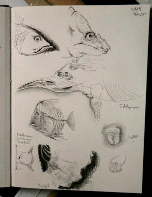 Skizzenbuch: Naturhistorisches Museum Wien