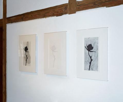 Eliana Bürgin | Diese Exemplare unterscheiden sich durch unterschiedliche Bildhintergründe, Ausstellung SchattenwurfSchatten, Trotte Arlesheim, Arlesheim, Schweiz | 2016