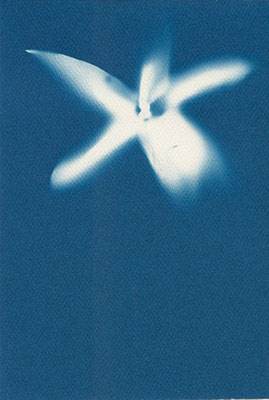 Eliana Bürgin   Blues 2011, Yucca Blüte, Cyanotypie auf Aquarellpapier 180 g/m2, kalt gepresstes Papier aus 100% Baumwollfasern, Blattgrösse 12 x 17 cm