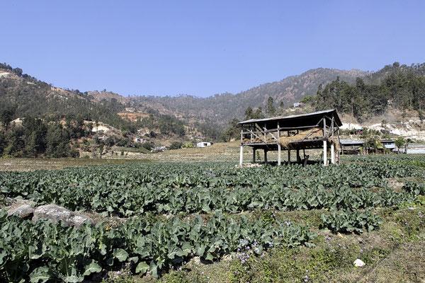 Das Dorf Goganpani liegt oberhalb einer sehr fruchtbaren Region am Hügel