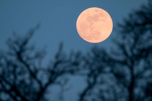 Mondaufgang im Winter auf dem Sonnenberg bei Luzern
