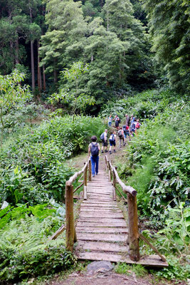 Wanderweg im Urwald, Sao Miguel, Azoren