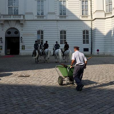 Lipizzaner vor der Spanischen Hofreitschule in Wien