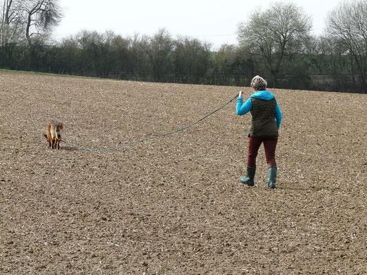 Rosi mit Flower bei der Fährtenhundprüfung 1