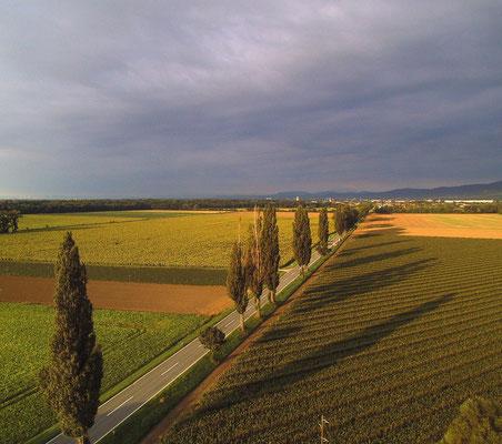 Morgenstimmung Luftaufnahme, Niederösterreich