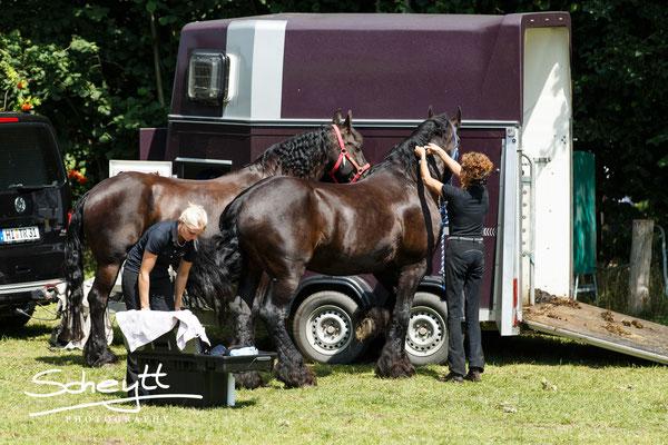 Die Pferde werden auf Hochglanz gebracht...