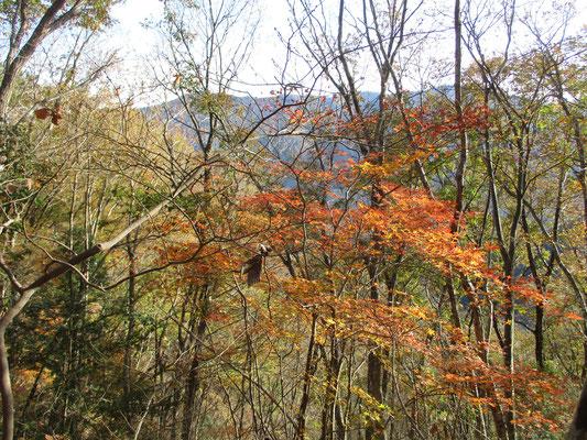 晩秋最後の紅葉 もうあとは冬の景色になるばかり
