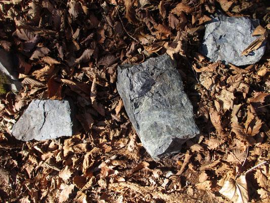 転がっている石には美しい縞模様があったり 海底で堆積したであろう泥岩(水成岩)ではないだろうか?などと 芦安山岳館では、それもあながち間違いでなかったことが判明