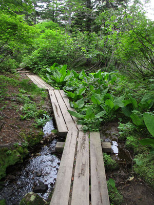こんなふうに整備された木道や橋を行きます