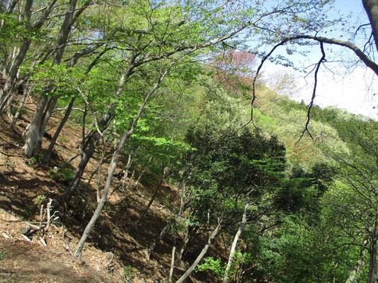 急登の華厳尾根も緑が美しく映えています