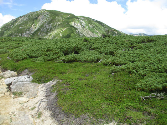 最後のピーク 双六岳の山頂部が見える