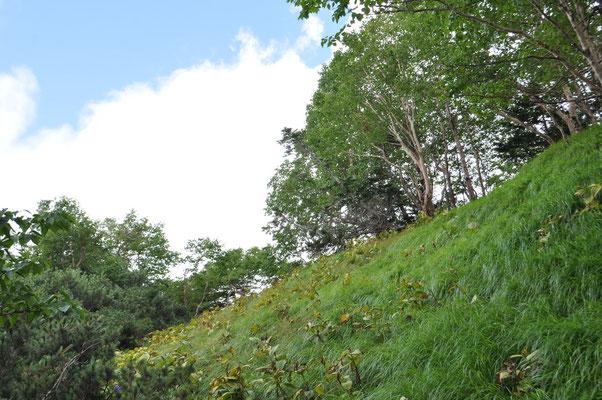 夏の盛りには見事な花畑だったと思われる草原 急登の上には青空が見えます