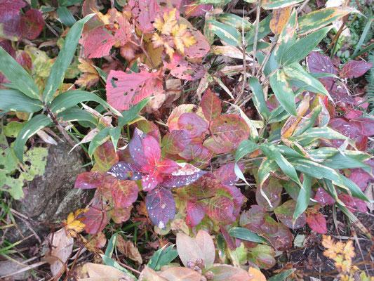 足元の小さな秋をたのしみつつ…