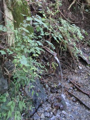 しばらく5分ほど下ると、植林帯のなかからこうして水が出ている!