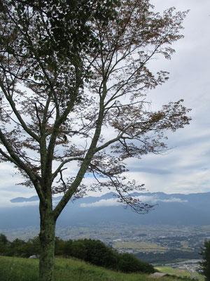 山頂に植えられた桜が少し色づいてきていた