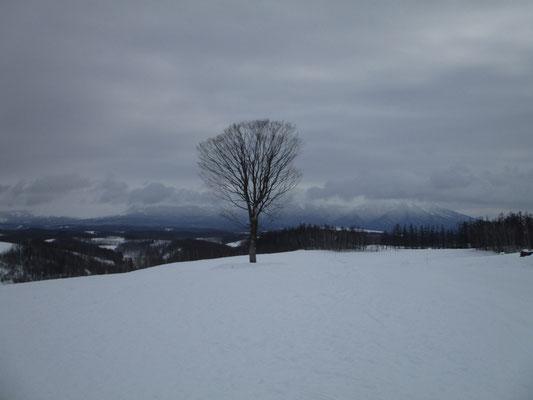 二日間で一番雲が上がったのがこの時 写真の木の下で粘って一枚描きましたが、山頂はとうとう見えずちょっと不発でした