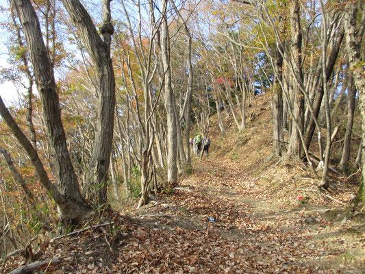 明るい雑木のなかを峰山方面に向かって進む