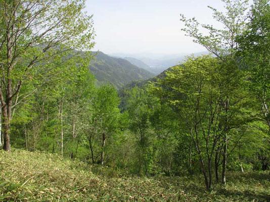 入野谷山を登り始めしばらくすると気持ちのいい景色が広がります