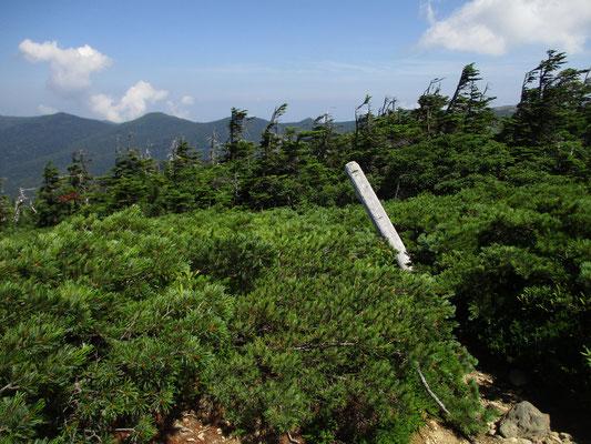 その山頂近くの樹林限界とハイマツ帯がくっきりと線を引いたように分かれているのが分かります