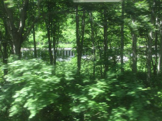 谷あいを走る只見線の車窓に映る緑は、なんとブナの林! 鉄道軌道と同じところにブナの森があることに驚きです 向こうに見える白い棒の並びは、国道のスノーシェイド(雪よけ)です 雪深い只見に近づくと多くなります