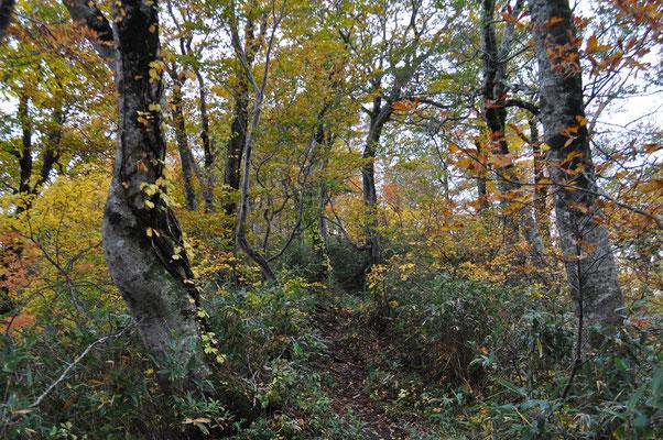 白神岳の秋6