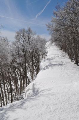 大明神に向かう稜線に積もった雪 布団のように覆いかぶさっている