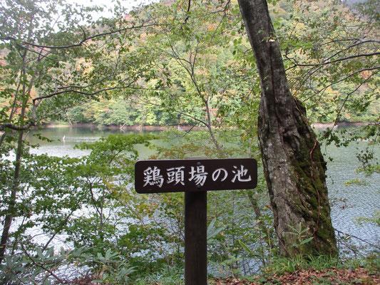 十二湖は約300年前の地震による山崩れによってできた山中湖沼群で、実は大小33の湖沼があるそう