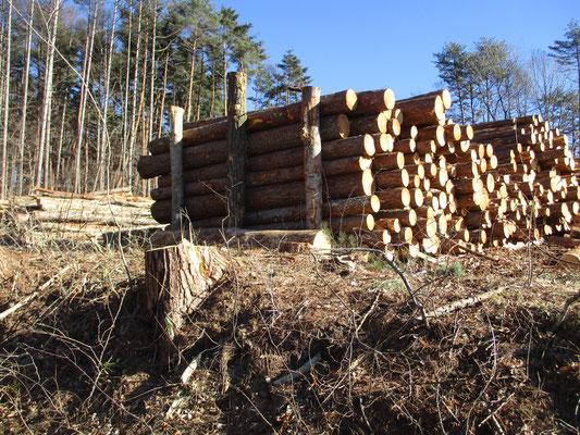 こんなカンジできちんと揃えて伐採したものを積んでおく 押さえの為に従来の木を3本ほど残しておき、それを支えにして積み上げる なるほど…である