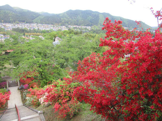 見事なツツジ庭園の愛宕神社内