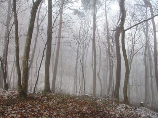 刻一刻と変わる林の表情