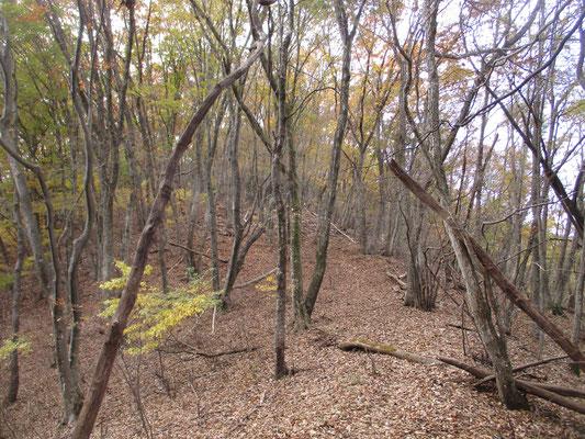 笹尾根の秋7