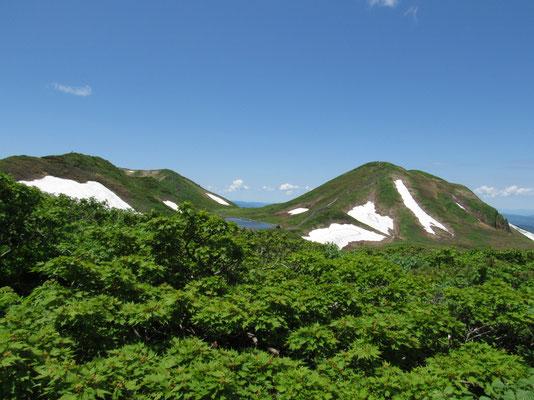 焼岳を下り樹林帯に戻ったときに見上げた秋田駒ヶ岳