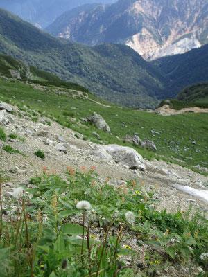 奥は湯俣川で硫黄岳の一部が見える場所 そこにタンポポ?
