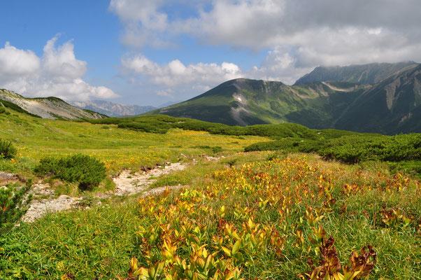 進むとコバイケイソウの花畑 茶色くなってすでに秋の様相