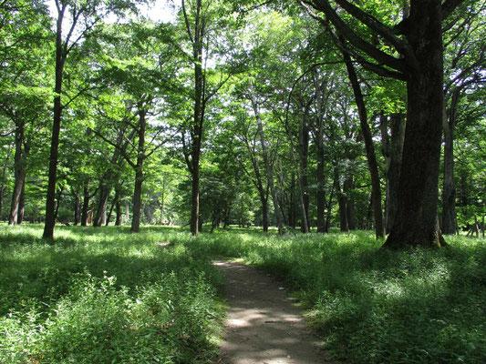 山の神に参ってから、再び心地よい森の小径へ