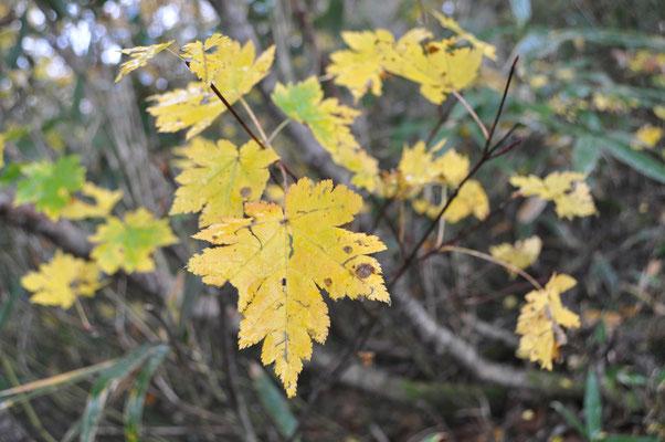 秋色の下山8