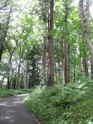美術館へは森の小径と言った雰囲気 ホタルブクロやシモツケが咲いていました