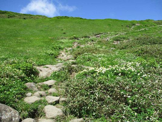花の咲く斜面を登る