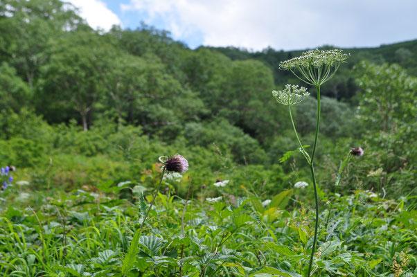花を前景に谷を見上げる