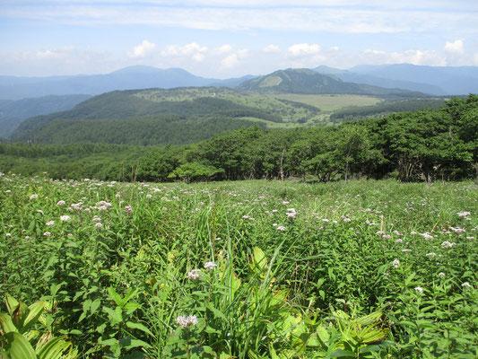 進んでいくとジオラマのように八島湿原や鷲ヶ峰が向こうに見える 手前の花はヨツバヒヨドリ