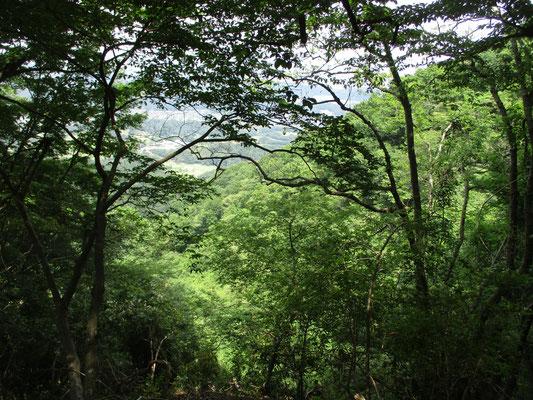 眺望も葉の茂りで遮られる