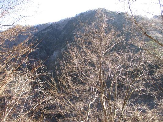 登山道が分からず歩き始めた林道 朝の陽を受けて小枝が輝きキラキラ 目が惹かれる