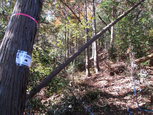 急登の連続 倒木もところどころに