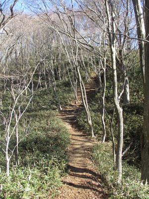 下山途中の山道 昔の丹沢の山歩きを彷彿とさせる光景で懐かしい思いがします
