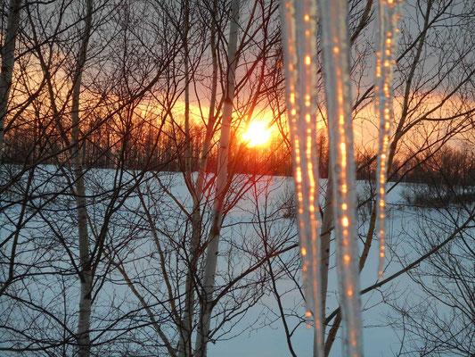 夕日が沈む つららが宝石のように輝いている