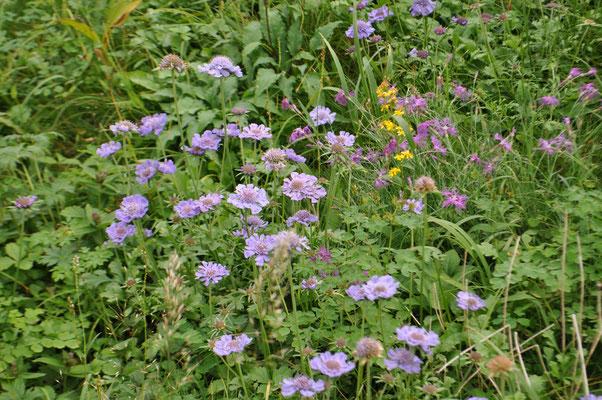 秋のお花畑 以下の花はそこに咲いていたものです