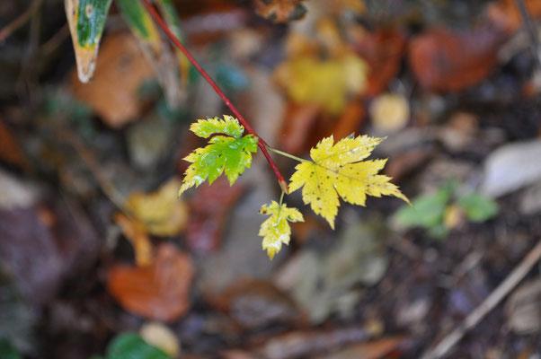 秋色の下山9