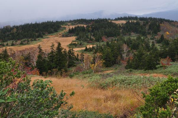 山麓はブナの森に包まれている山々も上部は草紅葉の草原と笹原、そして針葉樹が織りなす世界です