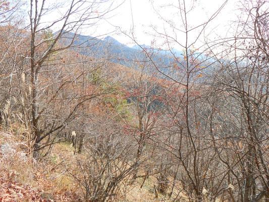 赤い実を付けた木々と青霞む遠景