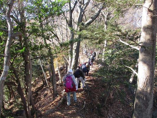 西山の特徴 気持ちのよい自然林のなかをゆきます